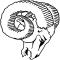 Rams AAA